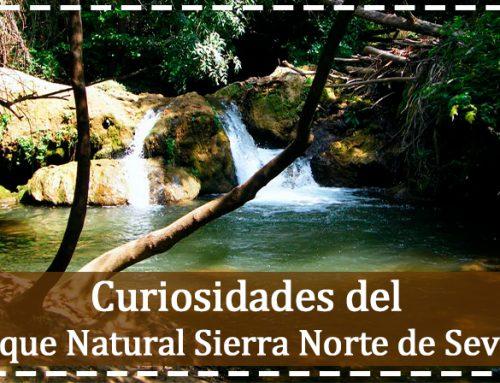 Curiosidades sobre el Parque Natural de la Sierra Norte de Sevilla